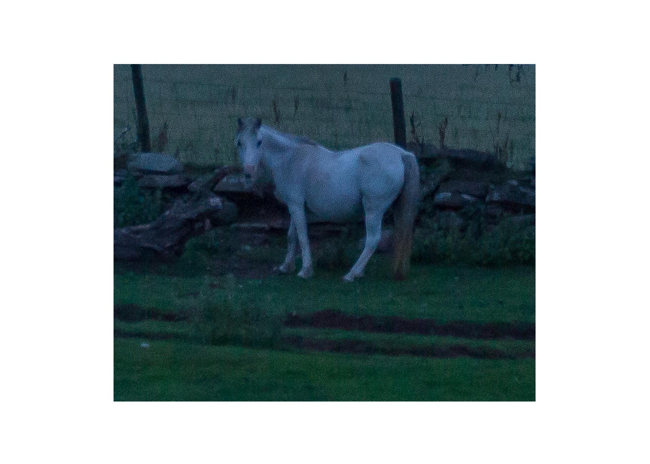 Talgarth Project ~ Horse hallucination
