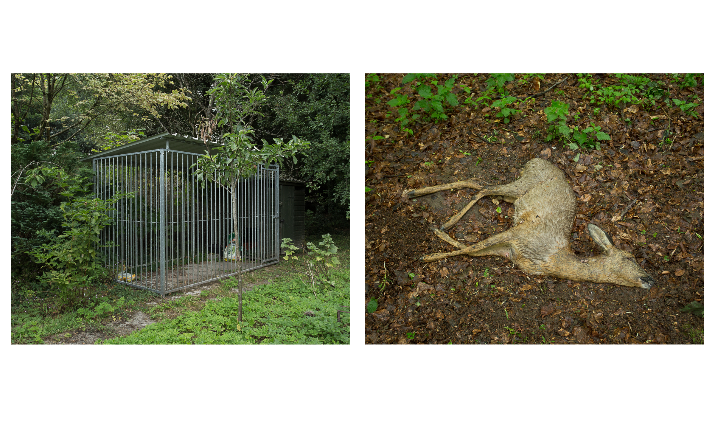 Deer & Cage diptych (colour)