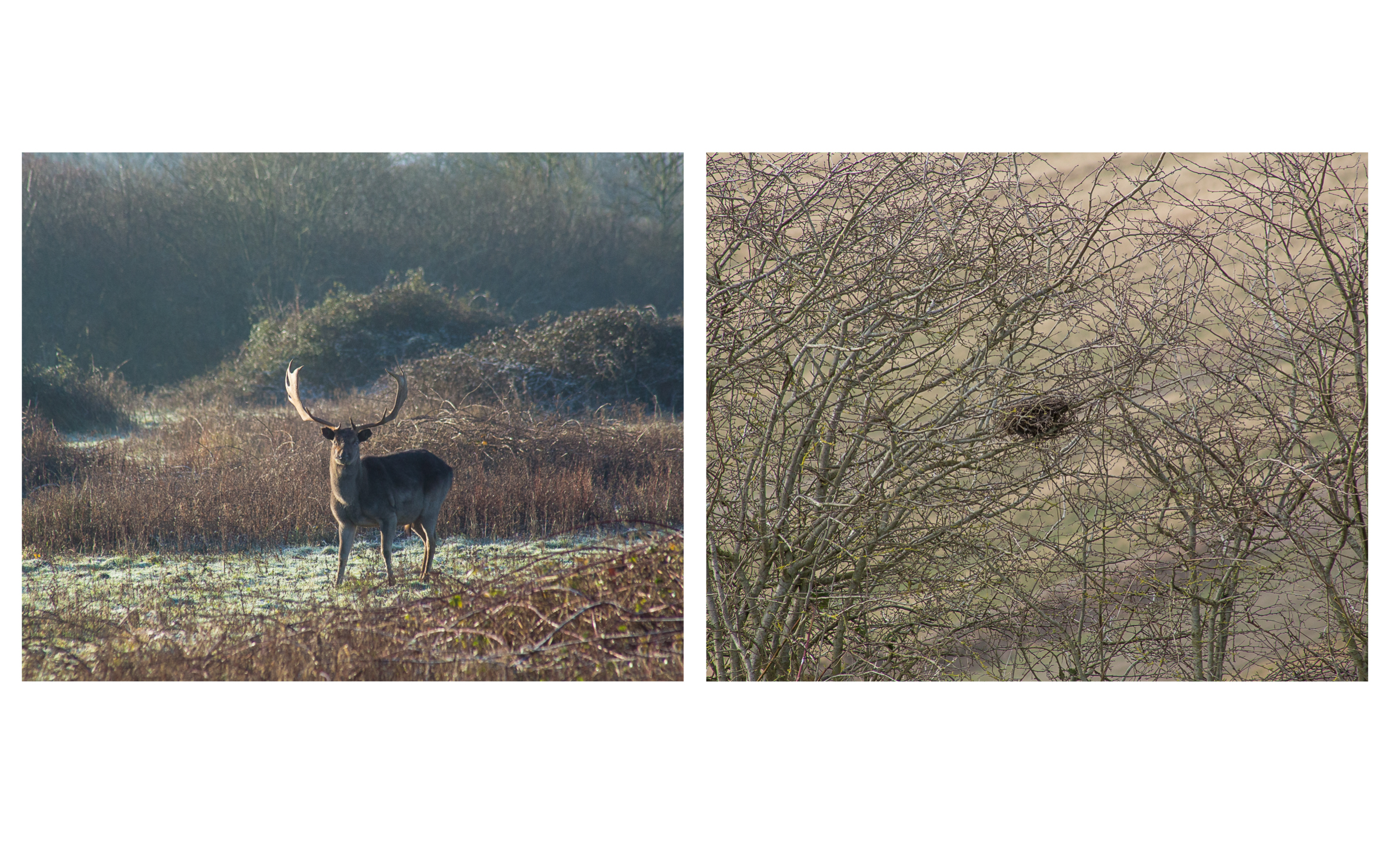 Gathering Time _ Deer & Nest diptych