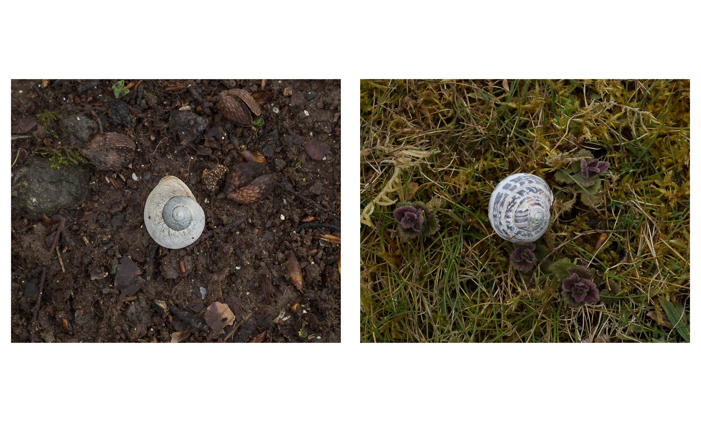 Gathering Time _ Shells 2 diptych