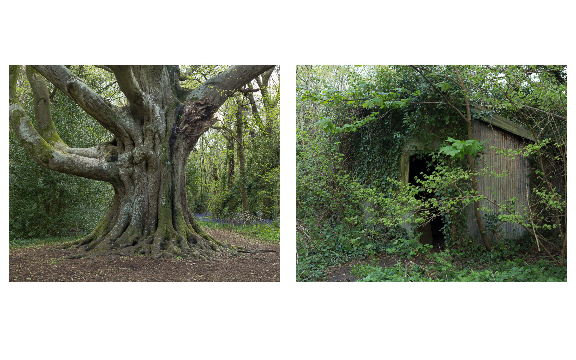 Gathering Time _ Tree and House diptych