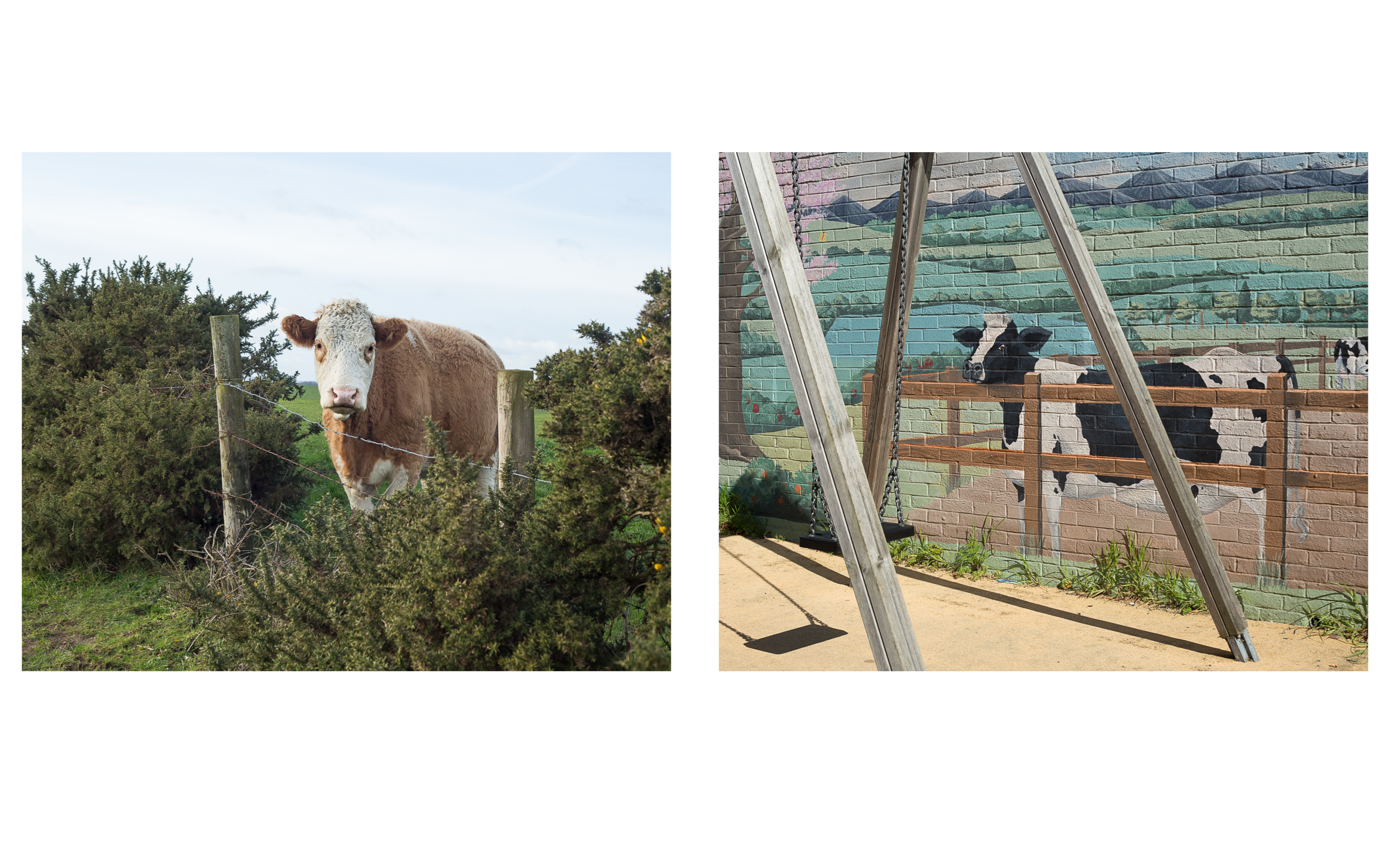 MAP6 Word Project _ Environment Cows (diptych)
